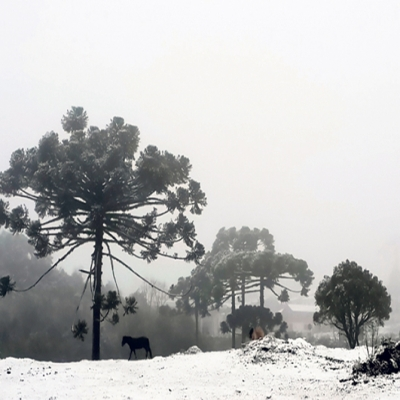 Com registros de neve nos últimos dias na Serra Gaúcha e na Região das Hortênsias, vamos recordar da última neve em Flores da Cunha. Ela foi registrada na noite do dia 26 de agosto de 2013, proporcionando paisagens lindas.