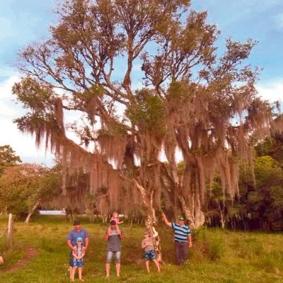 A foto é recente, mas a árvore é centenária. Da espécie Açoita Cavalo, a árvore se encontra nas terras de Luiz Carlos Molon, no Travessão Carvalho. Na foto, está o proprietário (à direita) com os genros Marcelo Lazzari e Leandro Lazzari, e os netos Igor, Lucas e Amanda.