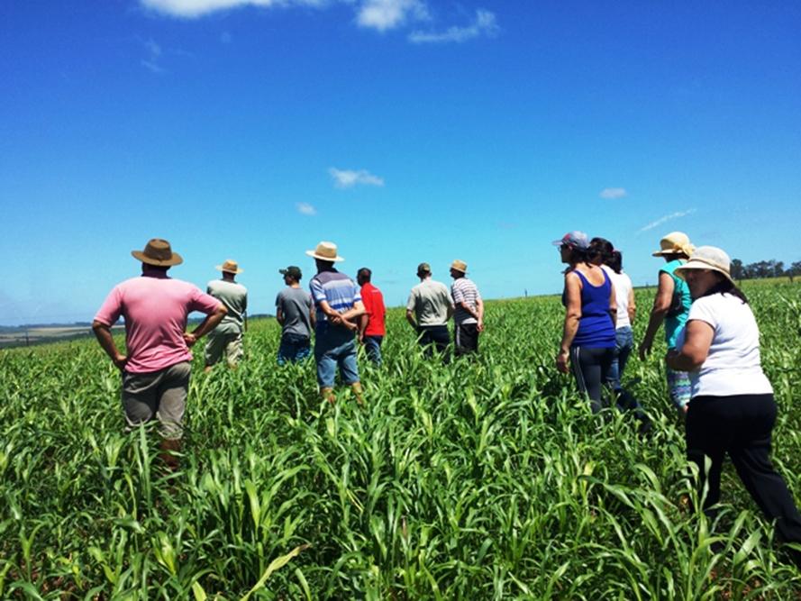 Dia de Campo tem como objetivo qualificar os produtores.