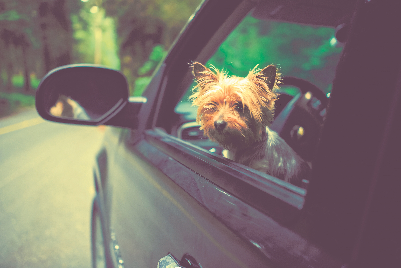 Cuidados são importantes na hora de viajar com seu pet.