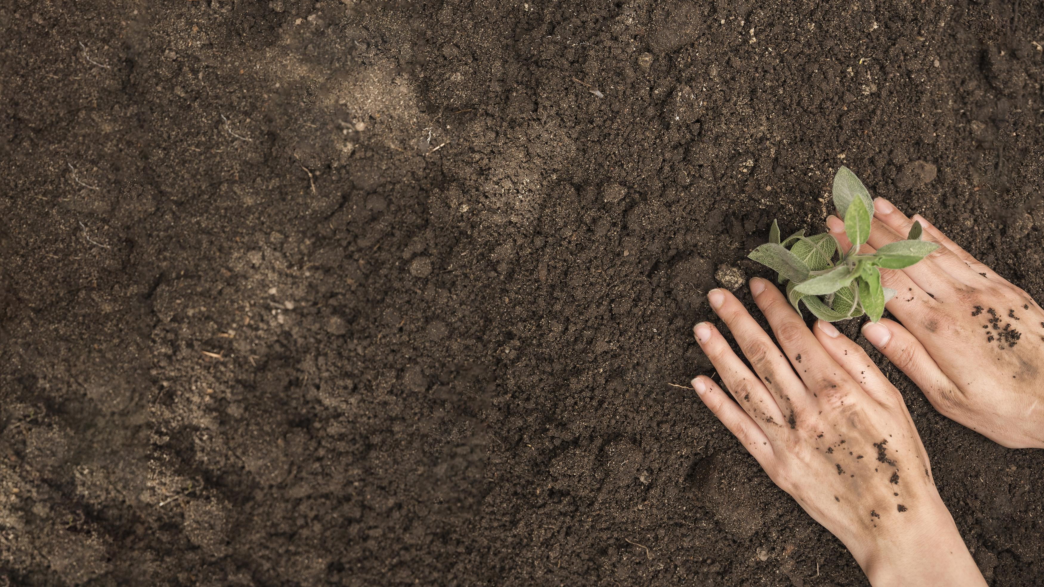 Horticultura será tema do curso.