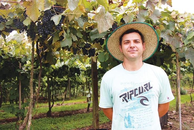 Leandro Piazza iniciou a colheita da uva nesta semana e espera por preços mais justos.