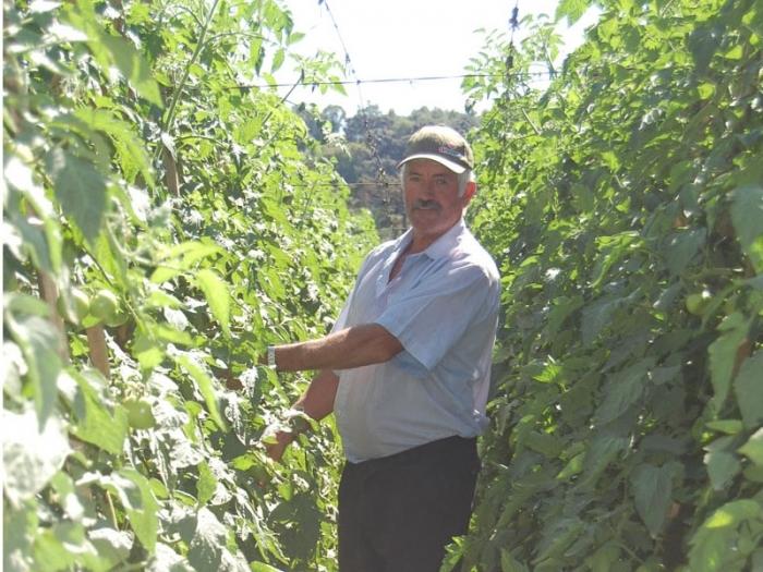Prejuízo de Martini foi de R$ 60 mil. Agora, perdas são amenizadas com plantação de tomates.