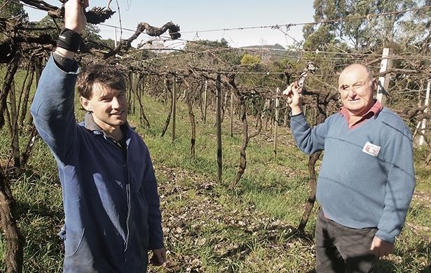 Tiago (E) e Antonio Caldart esperam ampliar a qualidade das frutas cultivadas no Travessão Martins.